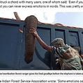 ゾウと最期の別れをする森林警備隊員(画像は『Metro  2021年1月22日付「Forest ranger gives tearful goodbye to elephant he cared for before it died」』のスクリーンショット)