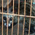 中国が野生動物の取引と消費を禁止へ 新型肺炎、発生源の疑惑を受け宣言