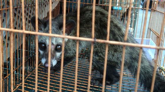 中国が野生動物の取引と消費を禁止へ