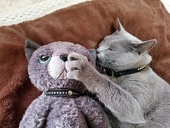 寝ている時でも「お友達」が大好き…ぬいぐるみを抱きしめる猫さんが尊すぎる