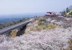 霧島神話の里公園 / 高千穂の山々と咲き乱れる桜の見事な大パノラマ
