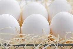 「卵は1日1個まで」の常識は古い 沢山食べればアルツハイマー予防も