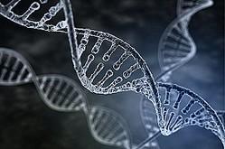 中国メディアは、日本人には「日本人特有のDNA」があるという研究結果を紹介する記事を掲載した。(イメージ写真提供:123RF)