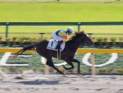 【東京5R/新馬戦】単勝1.4倍エヴァキュアンが楽勝