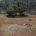 豪アデレードから100キロ離れたキャンプ場から行方不明になったデボラ・ピルグリムさんが、地面の上に残した「SOS」の文字。豪サウスオーストラリア州警察提供(2019年10月16日提供)。(c)AFP=時事/AFPBB News