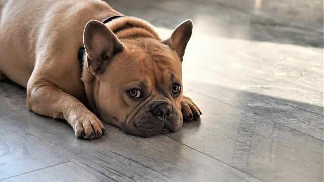 [画像] 愛犬の帝王切開の手術を無資格の知人に頼んだ男が逮捕 愛犬と2匹の胎児は死亡