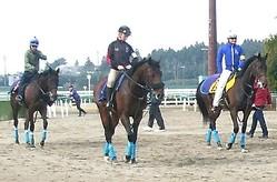【フローラS】ウィクトーリア 戸崎「背中が良くて雰囲気のある馬」