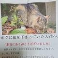 野良猫のキジトラからお世話してくれた人へ感謝のお手紙