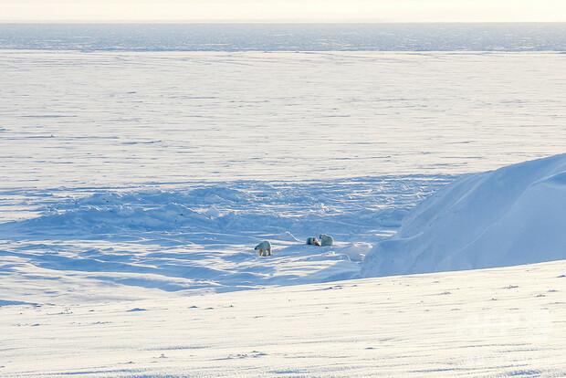 [画像] 北極圏の氷融解で五つの新たな島出現 ロシア
