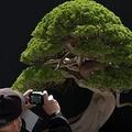 樹齢400年の盆栽を盗まれた日本人 Facebookに想い綴り海外で話題に