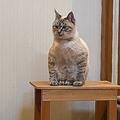 なんだか一風変わった座り方をする猫ちゃん※シワスさん提供