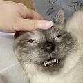 寝顔が残念な猫をTwitterで発見 あまりの表情に吹き出す飼い主