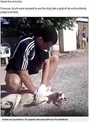 犬に心肺蘇生を行う19歳少年(画像は『Metro 2020年5月21日付「Teenager gives stray dog CPR after it had heart attack in the street」(Picture: FocusOnNews)』のスクリーンショット)