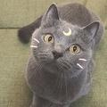 SNOWの猫用スタンプ「美少女戦士セーラームーン」のルナそっくり