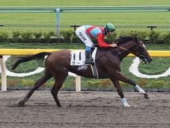 土曜東京4R新馬はゴールドアリュール産駒のウーゴが快勝