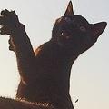 賛否となっている「黒猫はインスタ映え」問題 Twitterで実践してみた