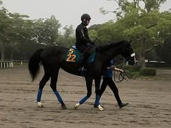 【注目新馬】シンハリング 近親にシンハライトがいる良血馬