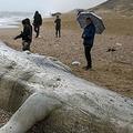 イスラエル南部アシュケロンで、浜辺に打ち上げられたナガスクジラの死骸の近くに集まった人々(2021年2月19日撮影)。(c)AHMAD GHARABLI / AFP