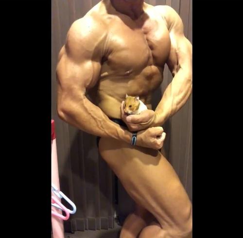 チェスト 筋肉 サイド