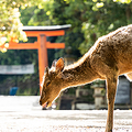 読めたらすごい!奈良県の難読地名ランキング