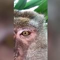 マレーシアでスマホがサルに盗まれる? 「自撮り動画」が残されていた