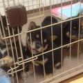 お腹を空かせた子犬たちが母犬に突撃「おかあちゃんお疲れさんw」