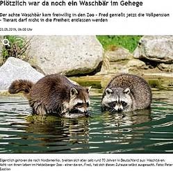 自ら動物園にやって来たアライグマ(画像は『Rhein Neckar Zeitung 2019年5月3日付「Plötzlich war da noch ein Waschbär im Gehege」(Foto: Peter Bastian)』のスクリーンショット)