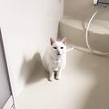 恐ろしい猫妖怪「ふろみたがり」が出没「うちにも居ます」の声