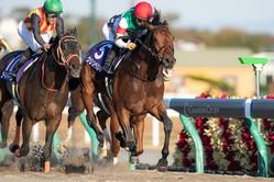 2020サウジカップ開催に出走予定の日本馬4頭がサウジアラビアに到着