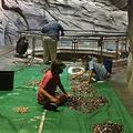 資金難に直面した米国の水族館 「客が願い事のために投げた小銭」を回収