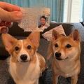 免許証ボロボロの悪質な事「犬」が発生 容疑者は犬二匹
