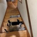 猫たちの集団嫌がらせで立ち往生 猫トラップがTwitterで話題に