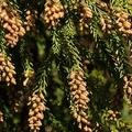 花粉の飛散量 東京や神奈川など全国各地で2017年の2倍以上の予想