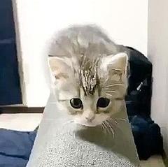 飼い主 もち まる 飼い主がトイレで目撃した『愛猫の衝撃的な姿』 「すごすぎ」「なんて賢いんだ」(2020年10月14日)|ウーマンエキサイト(1/2)
