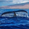 シー・シェパード創設者が非難の声明「日本は海賊捕鯨国になった」