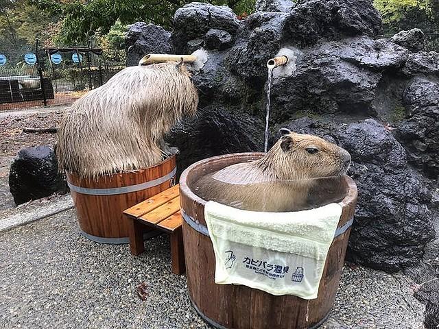 こども 動物 自然 公園