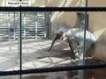 中国メディアの北晩新視覚網は24日、「山西省太原市の動物園で飼育されているゾウの様子がおかしい」との報告がネット上に寄せられたことを伝えた。