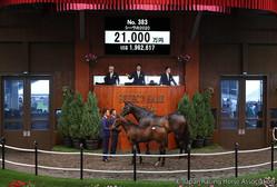 【セレクトセール2020】シーヴの2020が2億1000万円