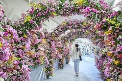 色とりどりの胡蝶蘭で飾られたトンネルは必見/[c]ハウステンボス/J-19737