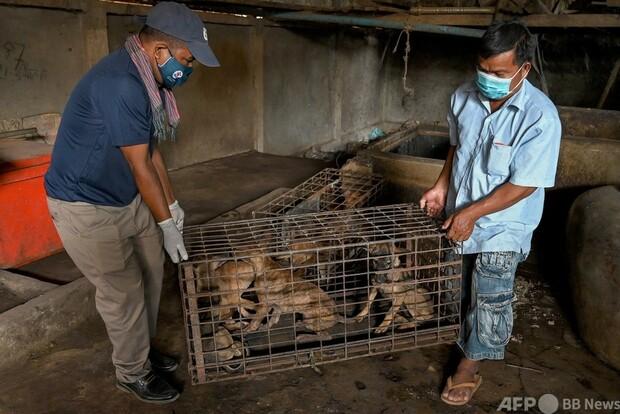 [画像] 犬の食肉処理場を閉鎖、25年で100万匹超を処理 カンボジア