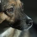 陝西省西安市の病院で18日、32歳の女性が狂犬病で死亡した。女性は6月20日に野犬にかまれた直後に狂犬病のワクチンを接種していた。そのため、ワクチンの有効性を不安視する声が高まった。資料写真。