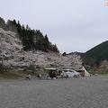 現場となったキャンプ場は天竜川沿いで桜の季節を迎えていた