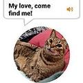 猫の鳴き声をヒト語に変換する「MeowTalk」 使えば使うほど精度が向上