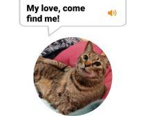 猫の鳴き声を、ヒト語に翻訳。元Amazonエンジニアが作った「MeowTalk」が楽しい