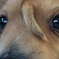 米ミズーリ州で頭に2本目の尾が生えた子犬を発見 切除の必要はなし