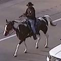 高速を馬で疾走 カウボーイ逮捕