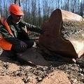 仏ルマン近くの森で伐採されたオークと近くに座る林野当局職員(2021年3月8日撮影)。(c)JEAN-FRANCOIS MONIER / AFP