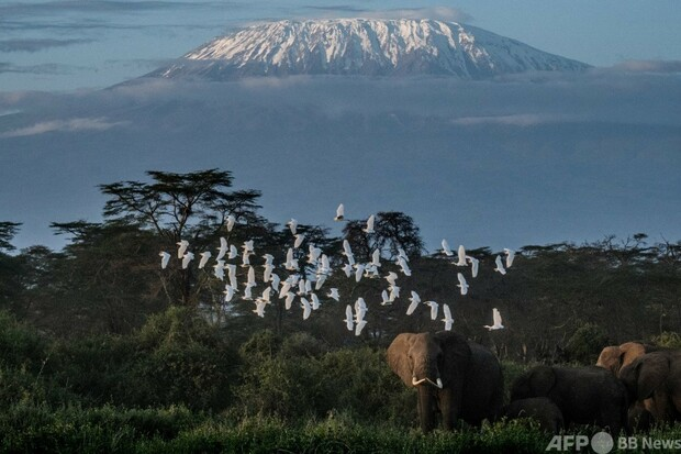 [画像] 密猟ではなくアボカド…ケニアのゾウに新たな脅威
