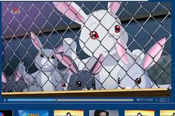 朝鮮中央テレビが配信したウサギの飼育についてのアニメ動画=北朝鮮の政府系サイトから