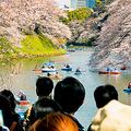 桜の枝を折り「花冠」インスタ映えに警告するツイートが大反響